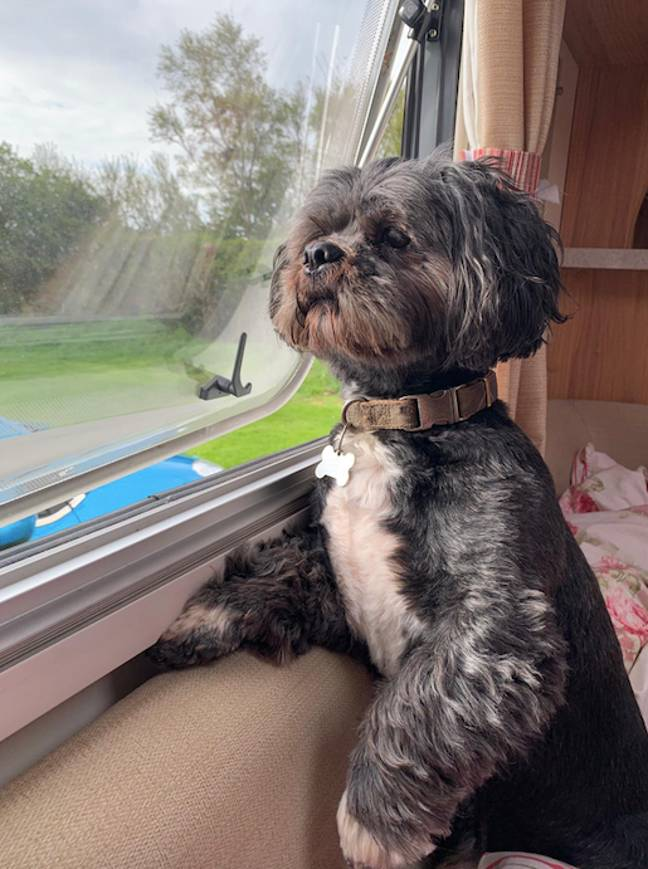 Does your pooch love sitting by the window? (Credit: Safestyle)