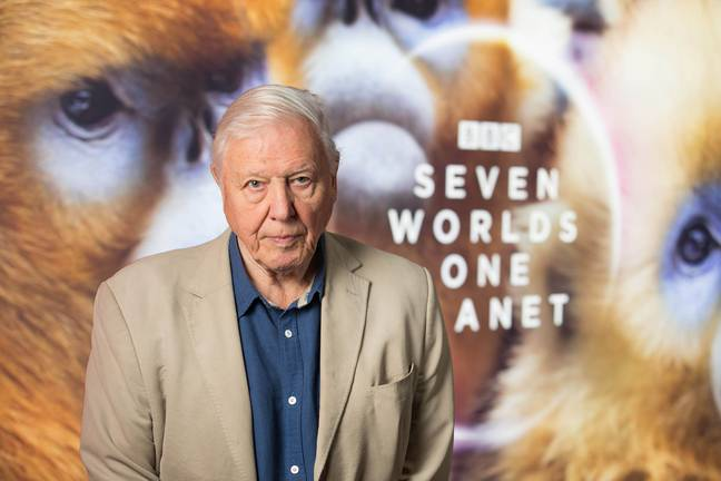 David was excited most about the footage of the nub nosed monkeys, telling the audience about them at the screening of the show. (Credit: PA)