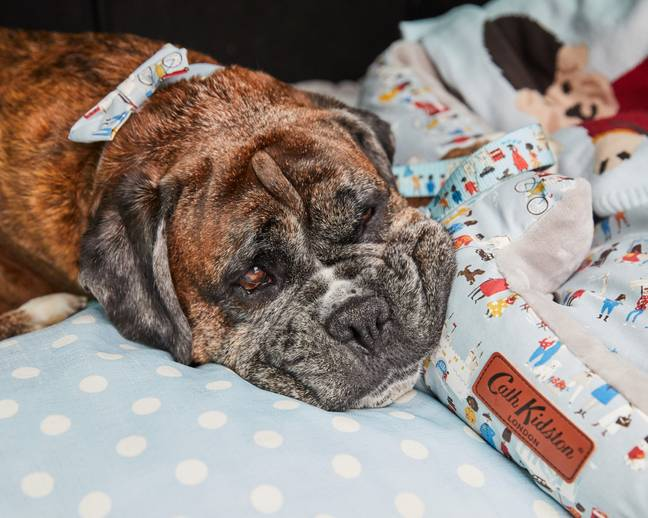 Cath Kidston has launched a nationwide search to find a dog to model its 2021 collection (Credit: Cath Kidston)
