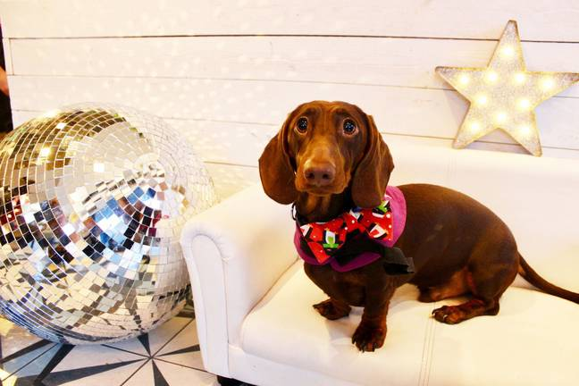 The doggy disco is being held at The Allegory in Shoreditch, London (Credit: Anushka Fernando /Dachshund Café)