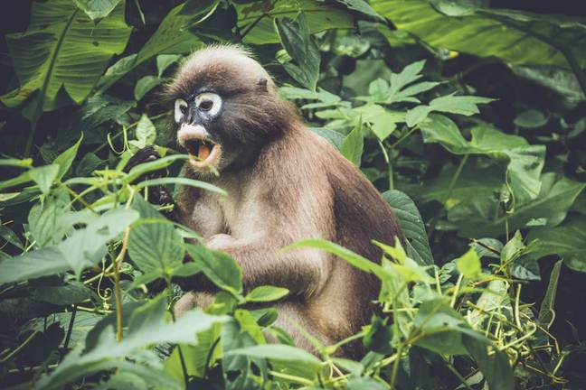 Film-makers got up close and personal with a whole range of primates (Credit: Unsplash)