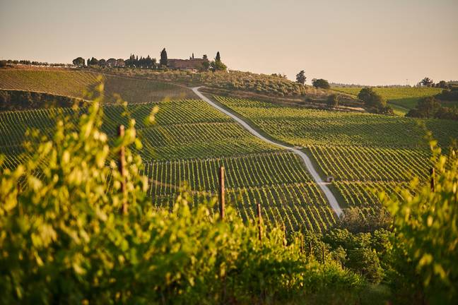The lucky candidate will get a secondment at an Italian winery and explore the surrounding vineyards (Credit: Unsplash)
