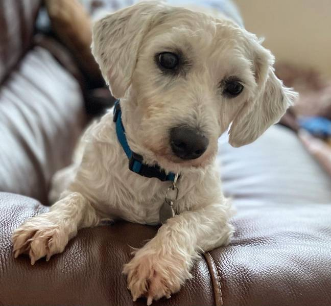 Frankie has had a serious transformation (Credit: RSPCA)