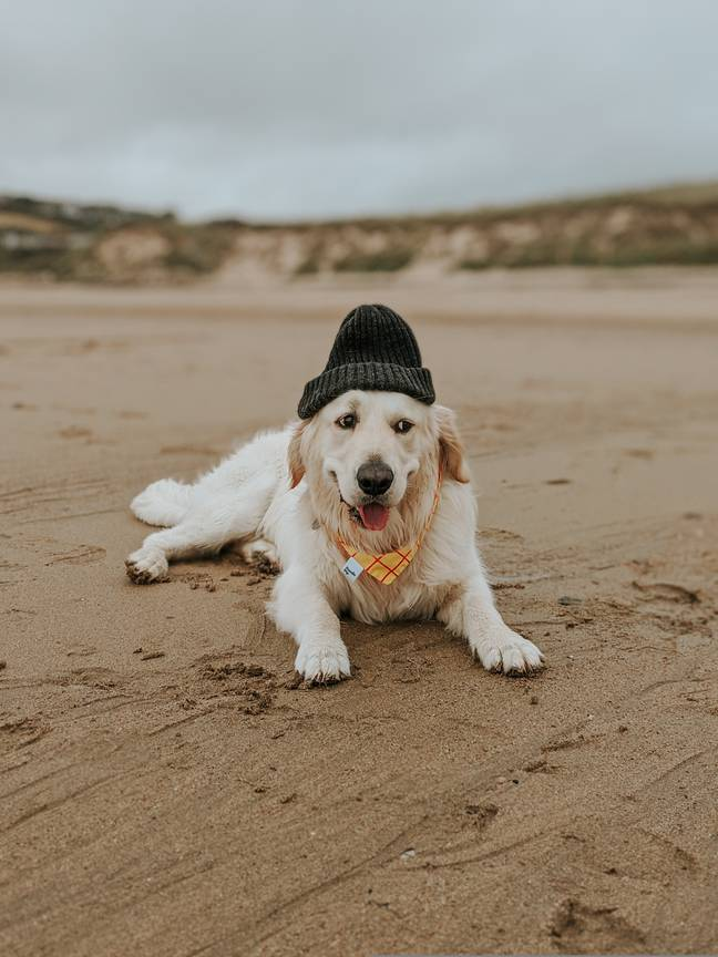 Enjoy long walks on the beach with your furry friend (Credit: Canine Critics)