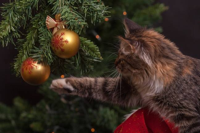 Cat-proof Christmas trees that are safe from the claws of even the most playful felines (Credit: Pixabay)