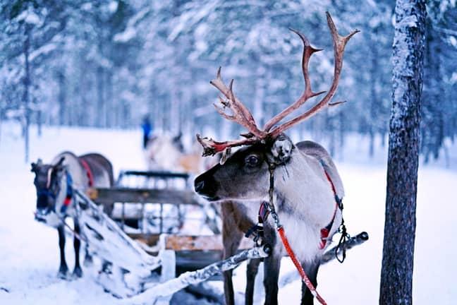 Reindeers need loving too (Credit: Unsplash)