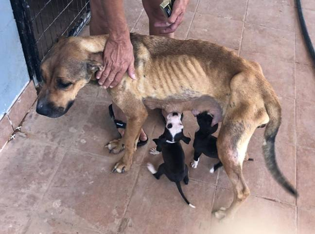 Dimitra couldn't bare to see the dogs suffer (Credit: Caters)