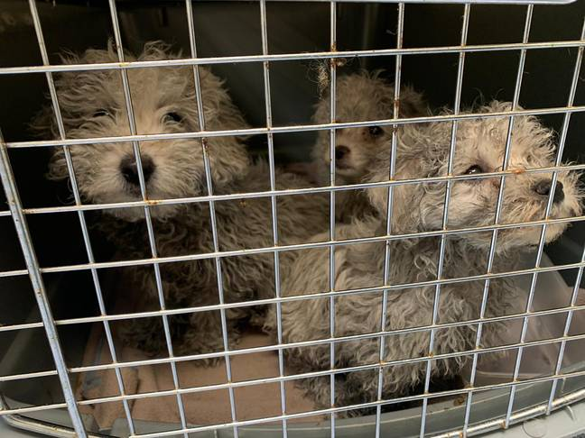 The pups were found in Dover (Credit: Dogs Trust)