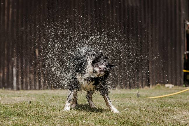 Heatstroke in dogs can be fatal, so it's essential that your pup has easy access to shade and plenty of water (Credit: Blue Cross)