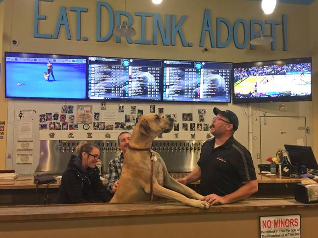 Fido's, claimed to be the World's First Dog Tap House, is located in Tigard, Oregon. (Credit: Caters)