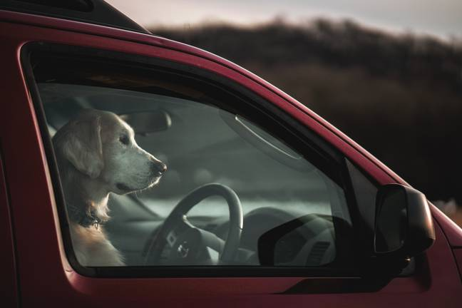Several pet charities have formed a coalition to warn owners about the dangers of leaving dogs in hot cars (Credit: Unsplash)