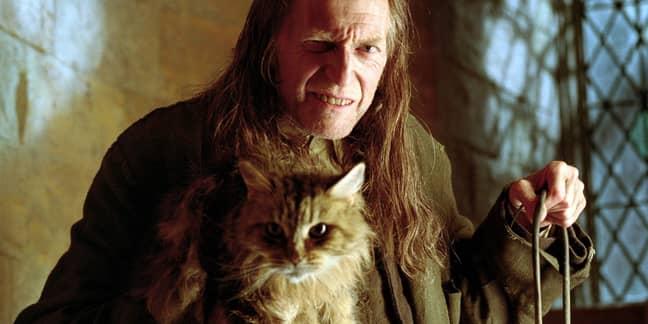 Filch and Mrs Norris aren't popular at Hogwarts (Credit: Warner Bros)