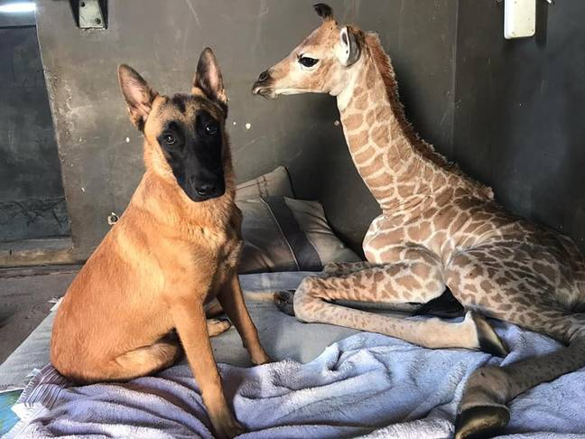 Jazz and Hunter were instant friends (Credit: The Rhino Orphanage/Facebook)