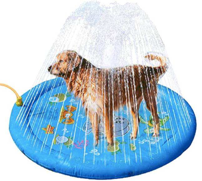 Amazon is selling a doggy sprinkler paddling pool and it's perfect to cool down your pup during the heatwave (Credit: Amazon)