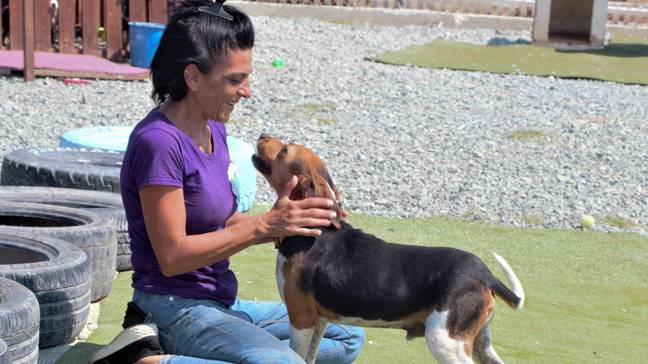 Dimitra Andreou now owns Doggy Warriors Rescue Sanctury and works there full time (Credit: Caters)