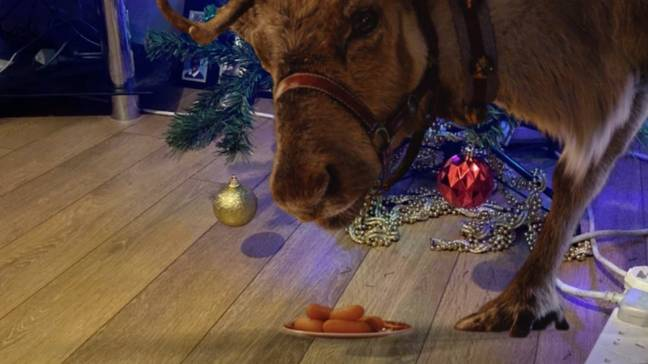 The app invites a reindeer into your house (Credit: Reindeer Ready/Tobi Akingbade)