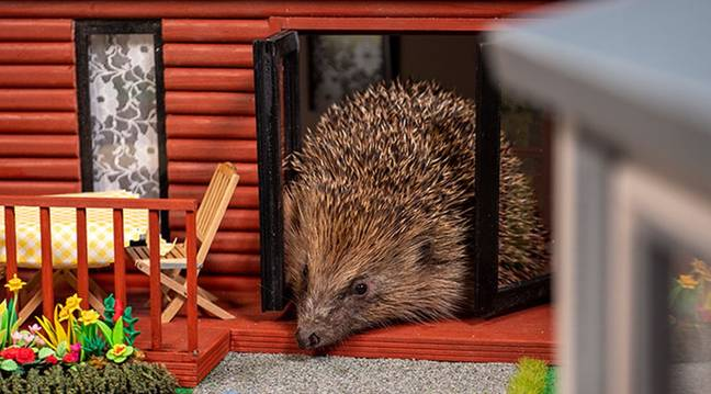 Hedgehogs will be in their element (Credit: Parkdean Resort)