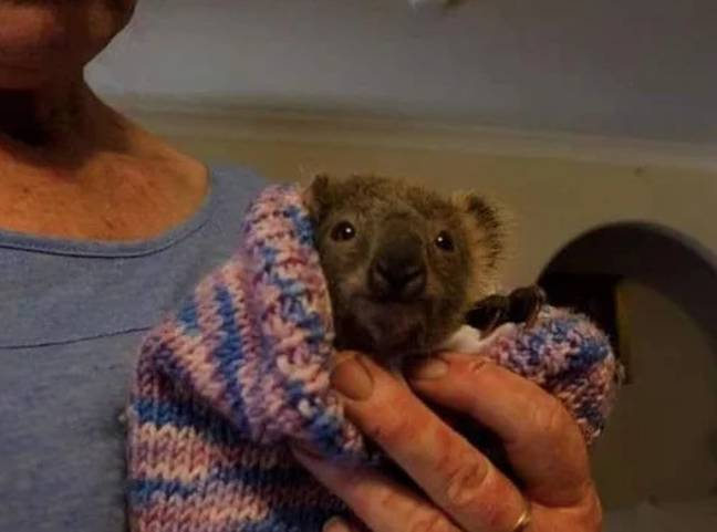 Creatures like wombats, possums and koalas require pouches to grow (Credit: Animal Rescue Craft Guild)