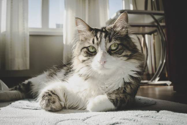 Researchers found the cats responded positively (Credit: Unsplash)
