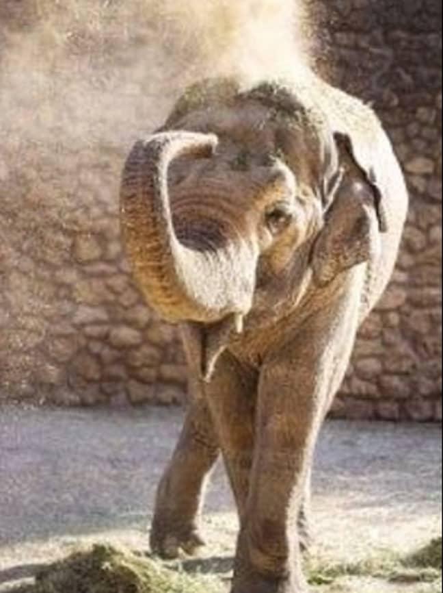 Credit: Facebook/ Zoo de Cordoba