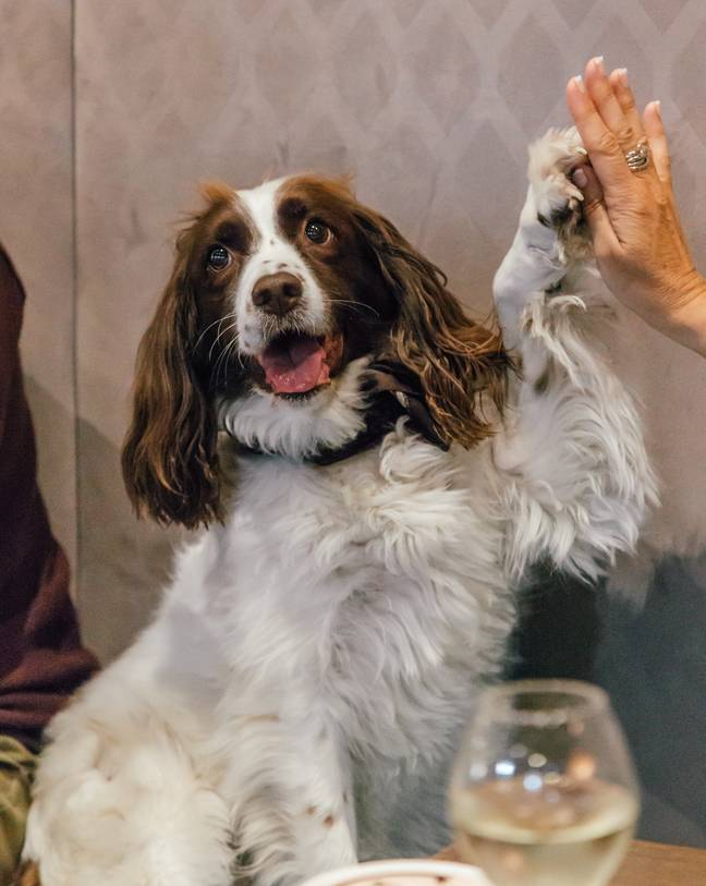 Dogs of all shapes and sizes are welcome provided they are trained, well-behaved and make less noise than a 'crying baby' (Credit: M Restaurants)