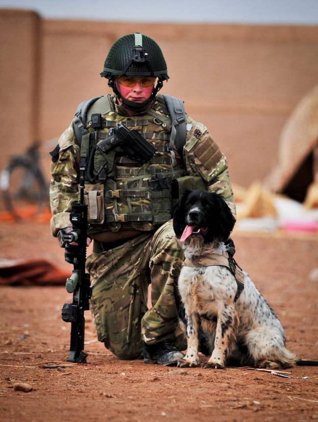 Theo passed away just hours after Lance Corporal Liam Tasker was killed by an enemy sniper in 2011 (Credit: SWNS)