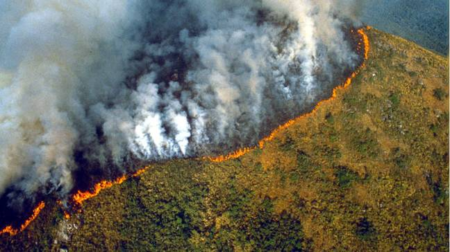 The Amazon Rainforest is burning at an alarming rate Credit: Shutterstock