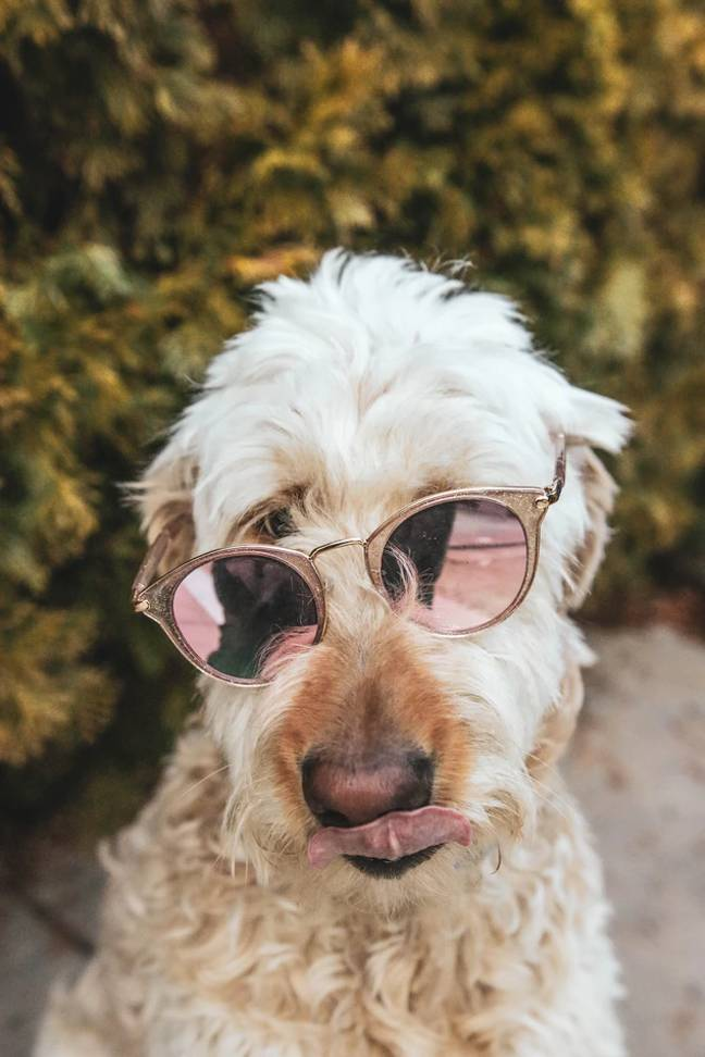 Treat your pooch to a pet sun bed (Credit: Unsplash)