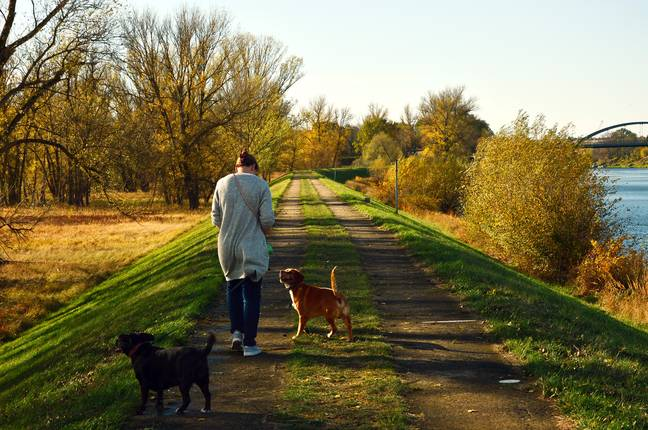 Dogs are being stole while out on walks, too (Credit: Pixabay)
