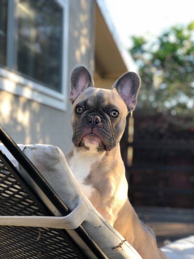 If you are set on buying a pup, make absolutely sure that the breeder is reputable (Credit: Unsplash)