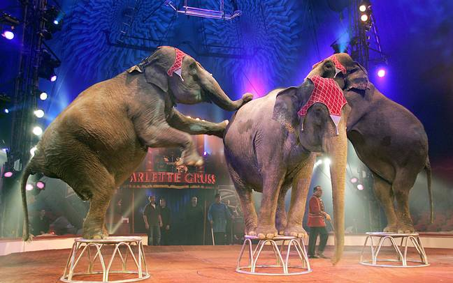 The new circus show from Arlette Gruss. Credit: PA