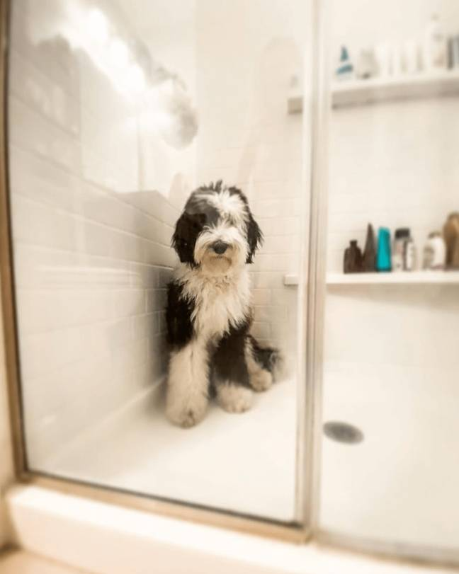 Some even shower with their dogs (Credit: Mira Showers)