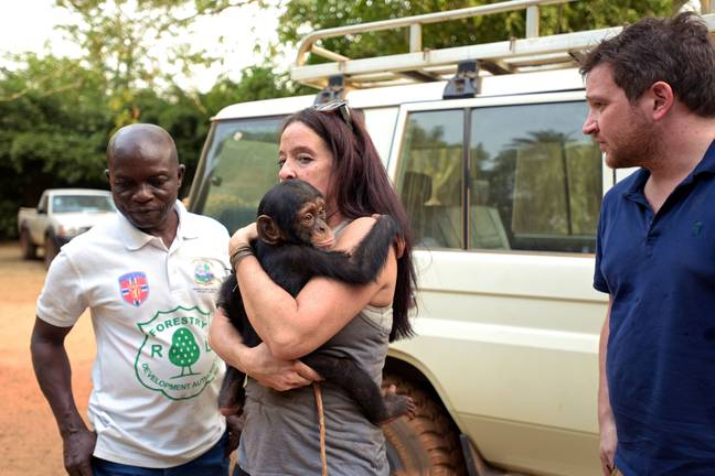 The Desmonds' home for rescued chimps began when they saved two chimpanzee orphans from the illegal pet trade (Credit: BBC)