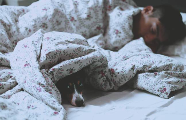 A quarter let their dog in their bed (Credit: Unsplash)