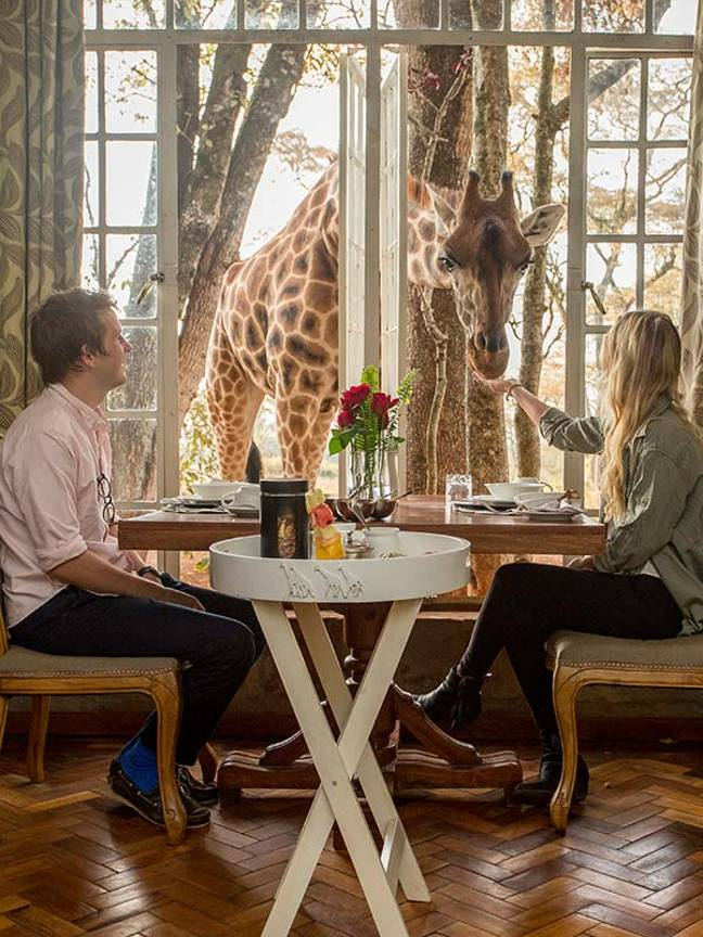 You could be eating your breakfast alongside the giraffes (Credit: Giraffe Manor)