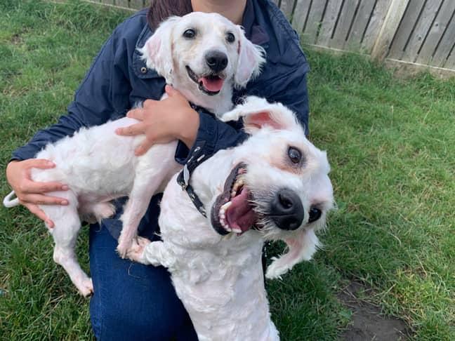 Frankie and Benny were rescued together (Credit: RSPCA)
