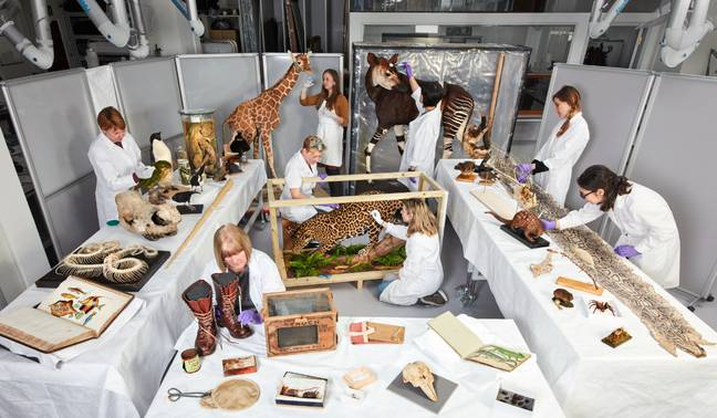The Natural History Museum have been busy prepping the exhibits (Credit: Trustees of the Natural History Museum)