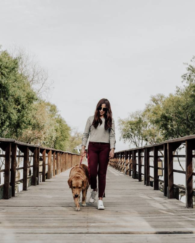 Dogs are at risk of heat stroke in the hot weather (Credit: Pexels)