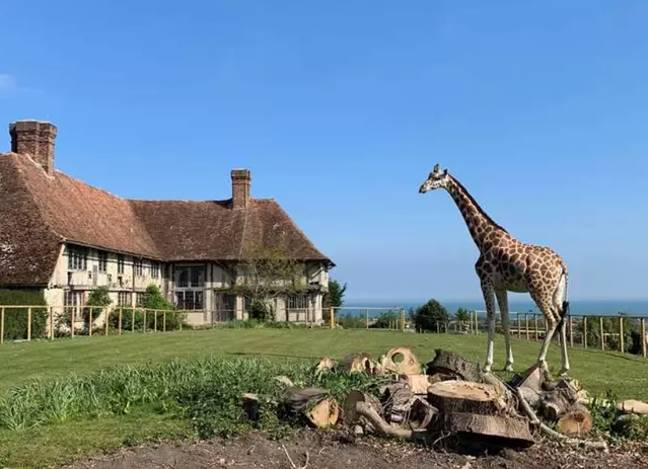 The hotel is expected to open Giraffe Hall next summer (Credit: Aspinall Foundation)
