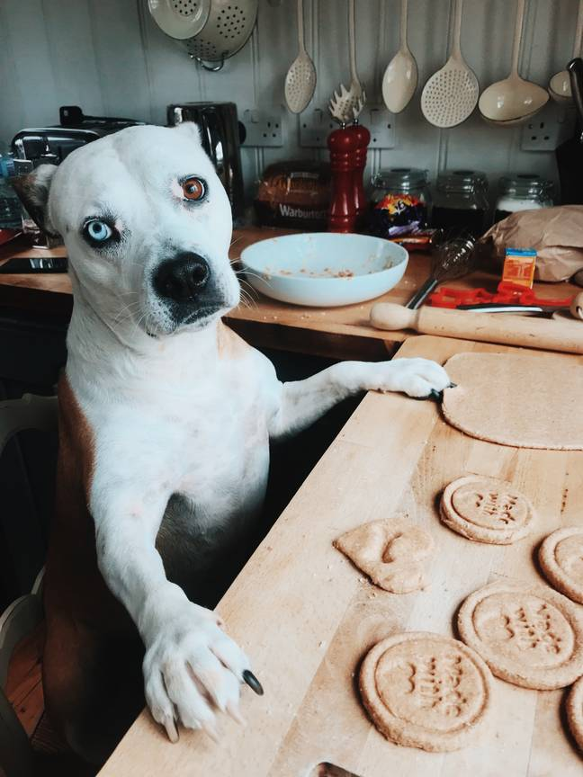 Free treats for everyone (Credit: Canine Critics)
