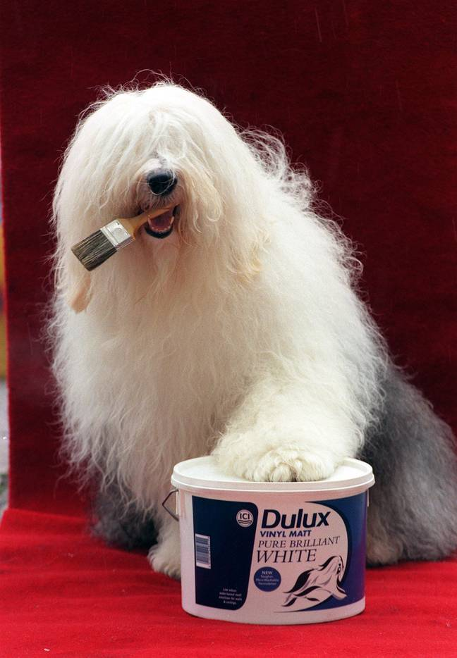 The Dulux dog in 1996 (Credit: PA)