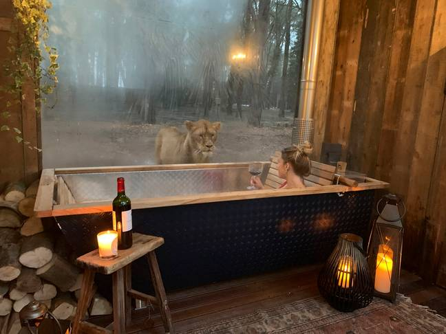 The lodges start from £1750 per night. (Credit: Caters)