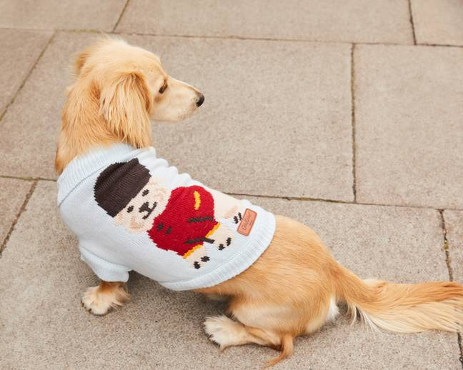 You can nominate your dog on Instagram and Facebook (Credit: Cath Kidston)