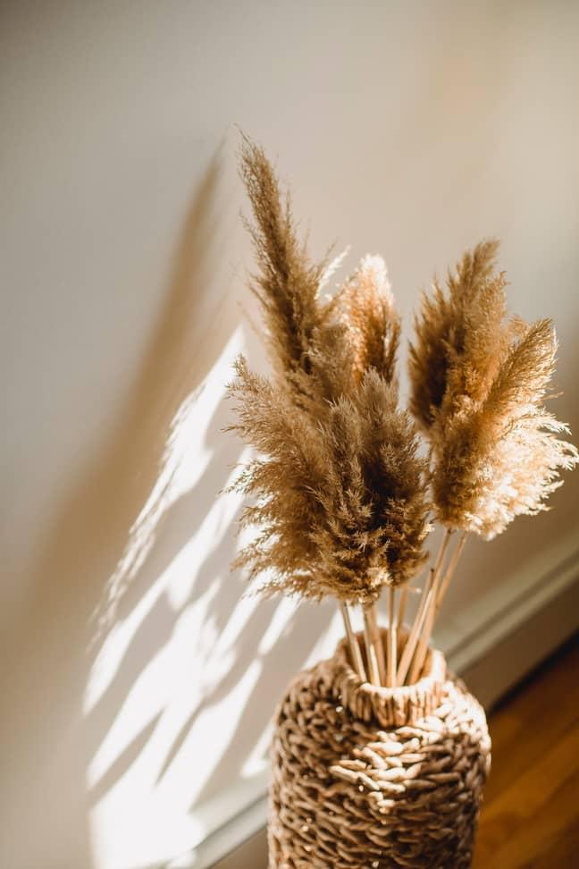 Pampas grass is now a popular indoor plant (Credit: Pexels)