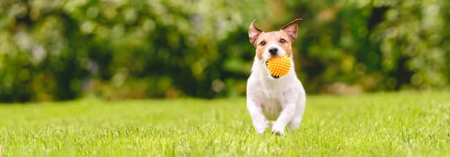 More may need to be done to socialise dogs (Credit: Shutterstock)