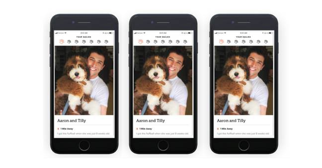 Your Dig profile looks much like a normal dating profile - as long as it's photos with you and your dog. (Credit: Dig)