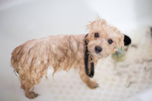 Your pooch needs a pamper too! (Credit: Pexels)