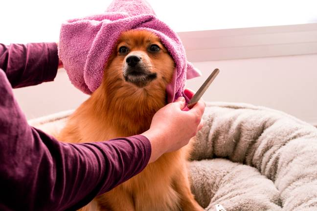 Regular grooming is also an essential part of caring for a dog's health and wellbeing (Credit: Unsplash)