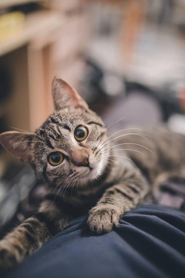 Don't let your cat sleep on your face during Mercury Retrograde, advises Jessica Adams (Credit: Unsplash/Ramiz Dedaković)