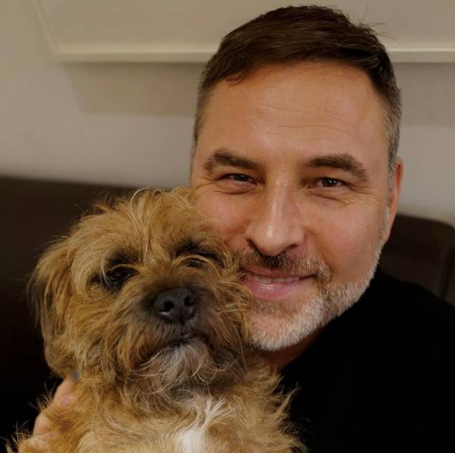 David Walliams has two border terriers who he loves dearly (Credit: Instagram - davidwalliams)